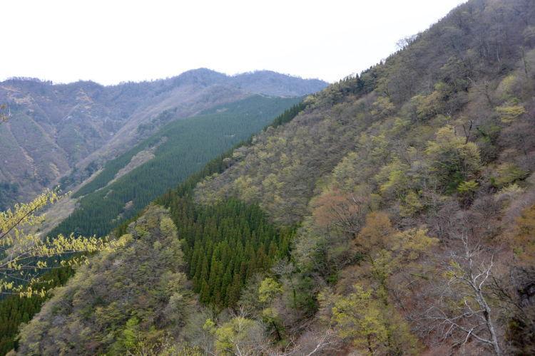 かの山   九州地方::熊本県
