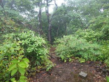 蛇尾山の山頂(標高920m)