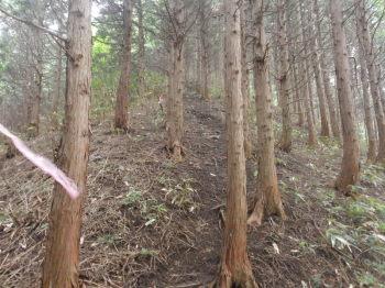 植林地の急坂
