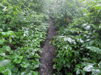 雨の登山道