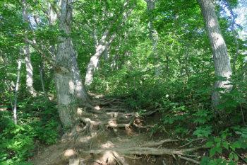 樹林帯の急坂