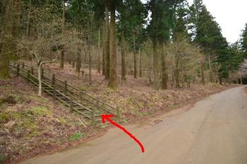 木段の遊歩道