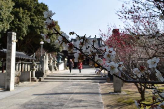 冠山総合公園01